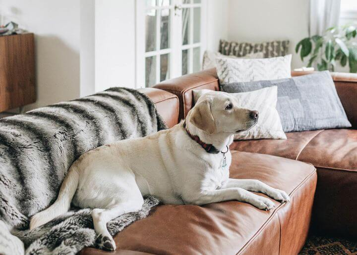 Sofa Damage – Pets