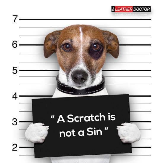 Pet Sofa Scratch